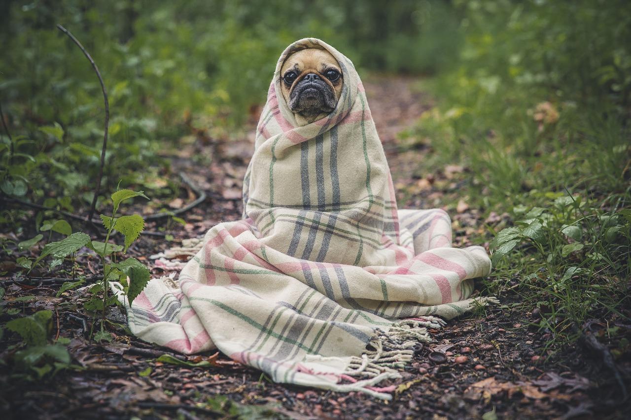 Perro tapado con una manta